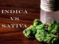 Sativa Vs Indica – What's the Best Marijuana For Me?